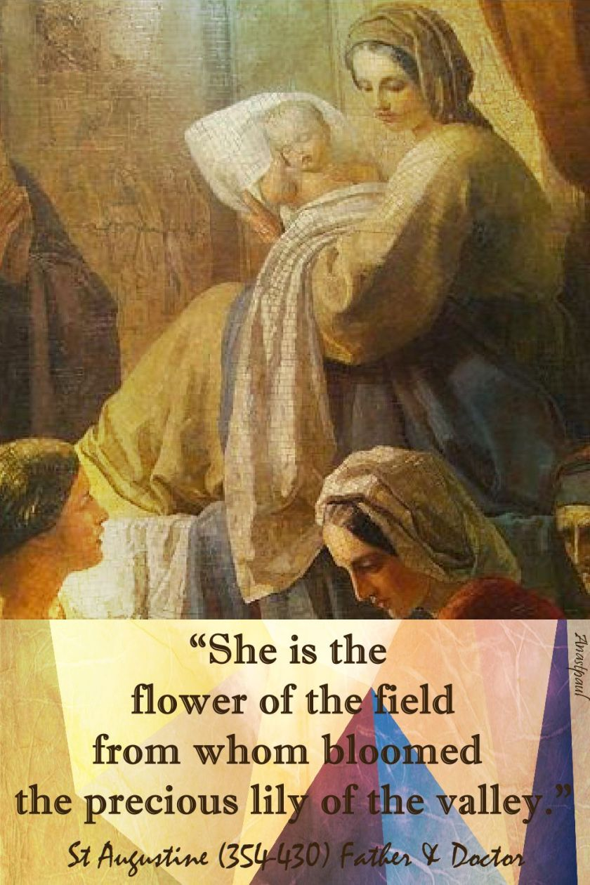 she is the flower of the field - st augustine
