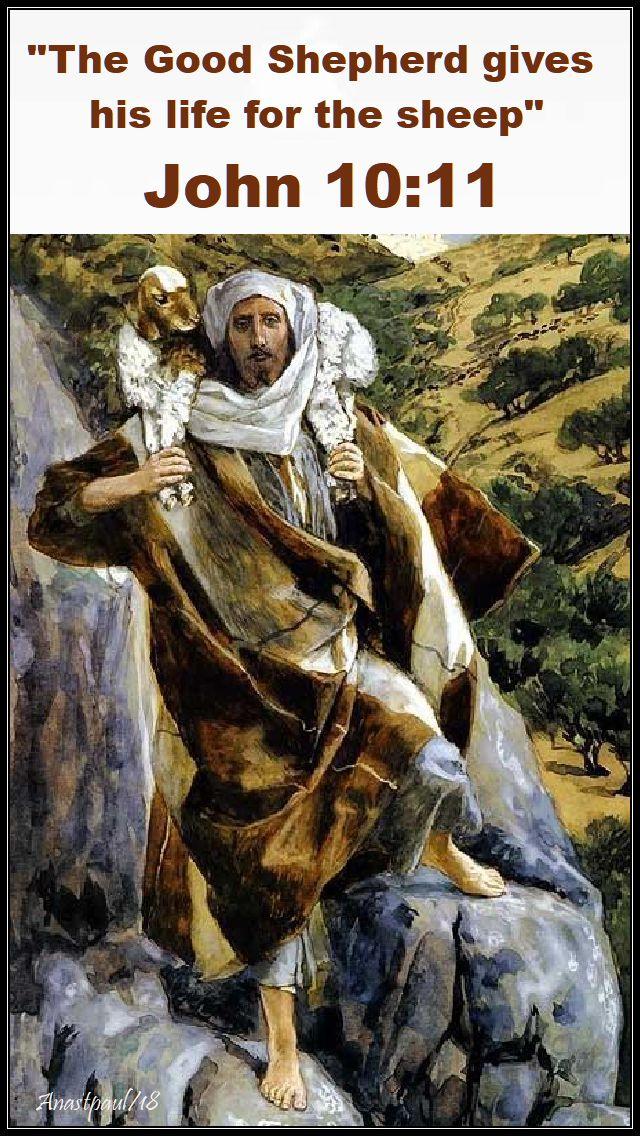 john 10 11 - good shepherd no 2