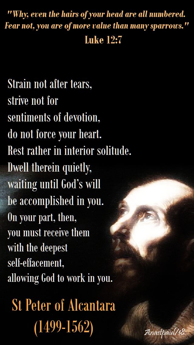 luke 12 7 - why even the hairs of your head - strain not after tears - st peter of alcantara - 19 oct 2018