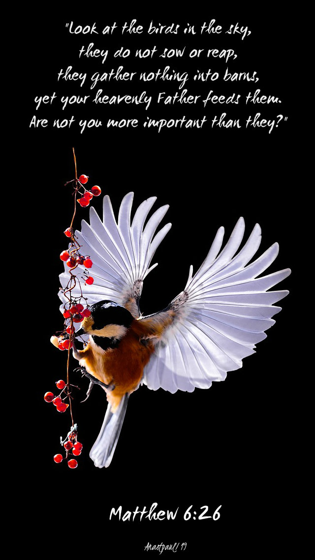 matthew 6 26 look at the birds of the air - 22 june 2019