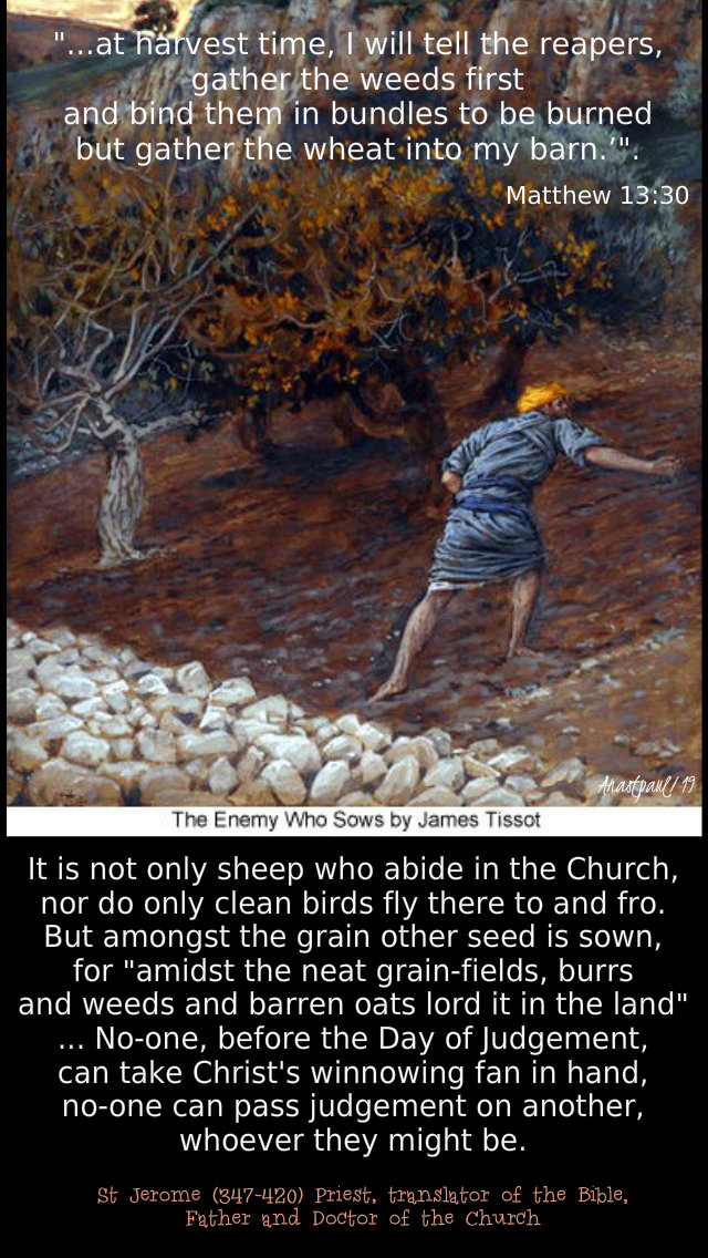 at harvest time i will tell the reapers - matthew 13 30 - not only sheep abide in the church st jerome 27 july 2019.jpg