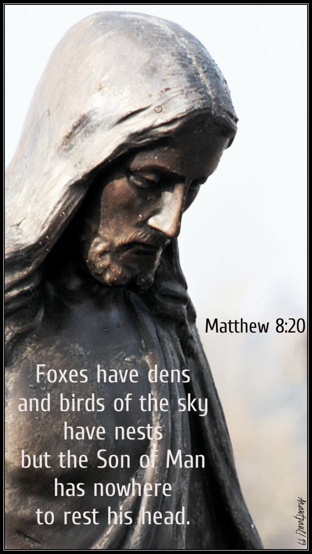 matthew 8 20 - foxes have dens 1 july 2019.jpg