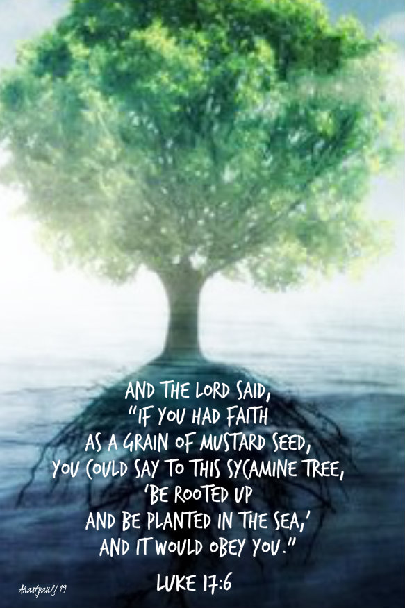 luke 17 5 if you had faith as a mustard seed and you said to this tree - 11 nov 2019