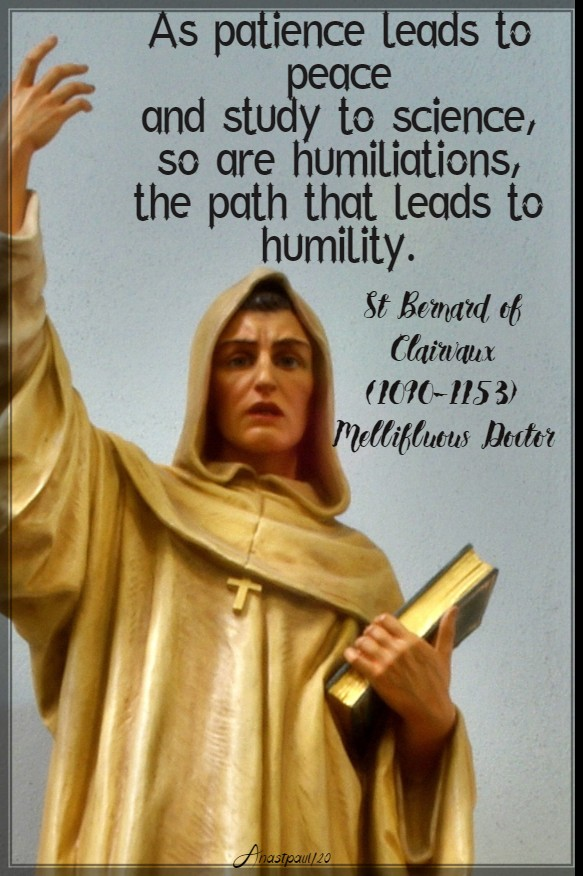 as patience leads to peace - humiliations leads to humility st bernard 11 march 2020