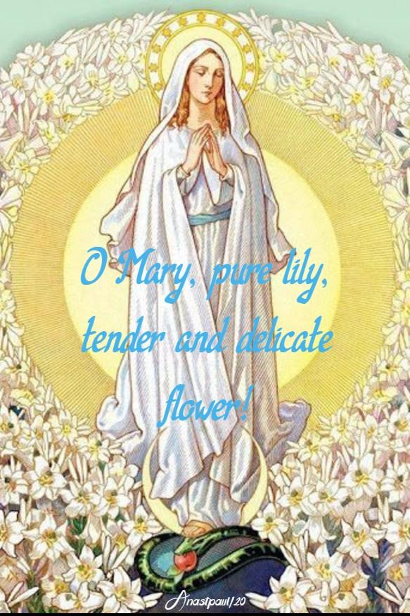 o mary pure lily 2 17 may 2020 st john XXIII