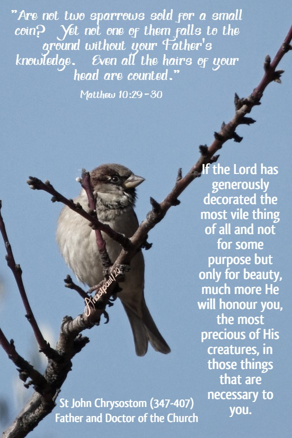 matthew 10 29-30 are not two sparrows sold - if the Lord has decorated ...how much more He will honour you - st john chrysostom 11 july 2020